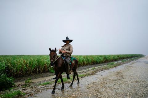 Un granjero cubano pasea a caballo junto a un campo de caña de azúcar
