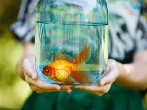 Ten cuidado a la hora de lidiar con tu pez.