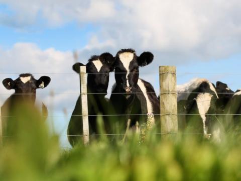 El metano proviene principalmente de la industra agrícola.