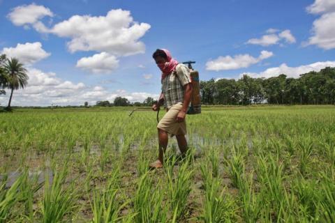 Un agricultor rocía pesticidas que contienen monocrotofos en un arrozal al oeste de Agartala, capital del estado de Tripura, al noreste de la India, el 25 de julio de 2013.