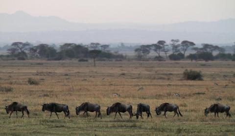 El parque del Serengueti, en Tanzania.