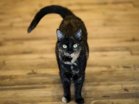 Toxoplasmosis is spread by cats and can linger in your system for years.