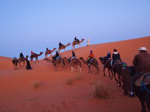 Turistas en camello por el Sahara