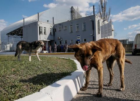Varios perros cerca del sarcófago que confina uno de los reactores dañados de Chernobyl