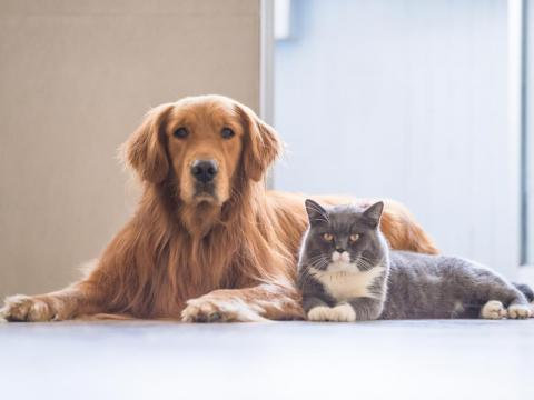 Yes, you can get sick from your cats and dogs.