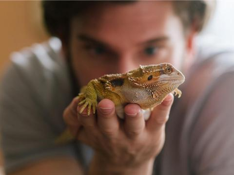 You can catch Salmonella from reptiles and amphibians.