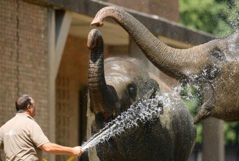 El zoo de Berlín combate la ola de calor