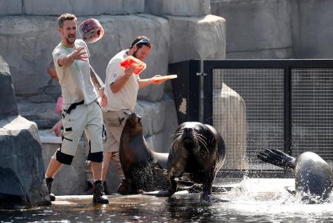 El zoo de París combate la ola de calor