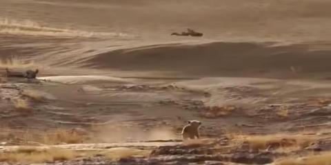 Vemos cómo hace Simba para llegar al desierto.