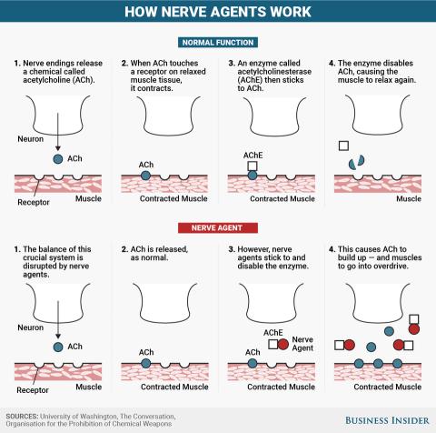 Los agentes nerviosos apuntan a las conexiones entre los nervios y los músculos.