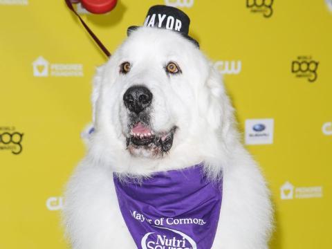El alcalde Duke, en su llegada al certamen World Dog Awards en enero de 2015.
