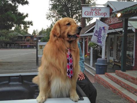 And he's not the only dog mayor around. Meet Max II, the mayor of Idyllwild, California.