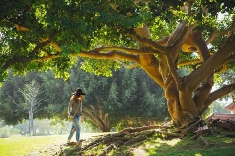 Pasear por un entorno natural puede favorecer estados de ánimo positivos.