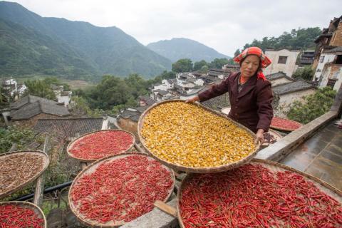 Un agricultor recoge la cosecha para secarla en el antiguo pueblo de Huangling en Wuyuan, provincia de Jiangxi, China.