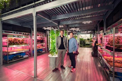 Ikea huertos urbanos