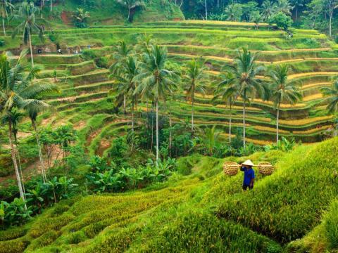 Ubud, Bali, Indonesia.