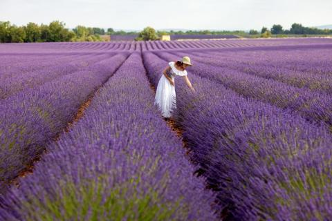 Lavender farmers in England appreciates the Instagram photo takers who pay to visit their land, but they complain that it gets too overcrowded on the weekends.