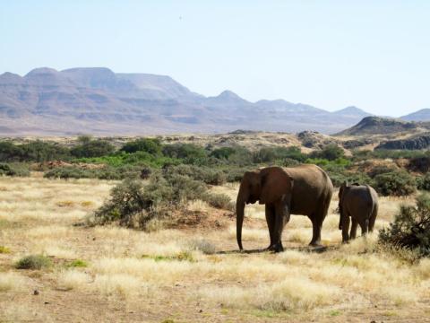 Los elefantes vagan en la conservación de Torra en Namibia.