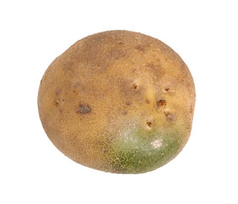 Las manchas verdes de las patatas esconden toxinas