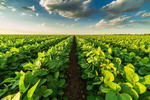 Los principales enemigos de los bosques son la industria y la agricultura. El estudio destaca la importancia que la reforestación tiene en la lucha contra el cambio climático