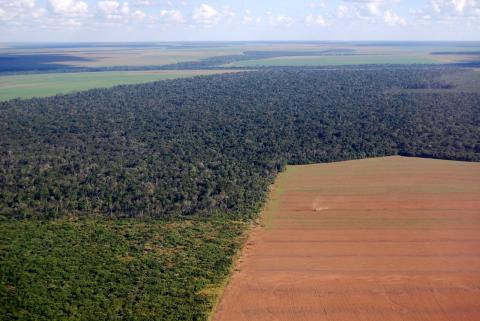 La reforestación a escala mundial tiene un gran potencial para capturar el carbono de la atmósfera y mitigar el cambio climático, pero no se aprovecha su potencial