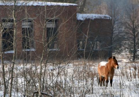 Scientists released an endangered horse species into the area.