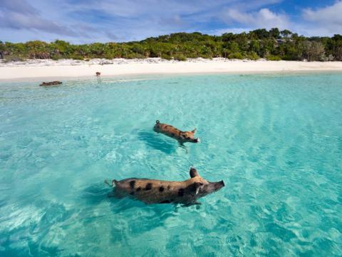 Las Bahamas.