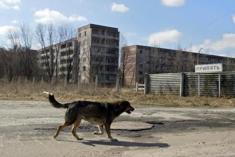 Stray dogs might have started mating with local wolves.