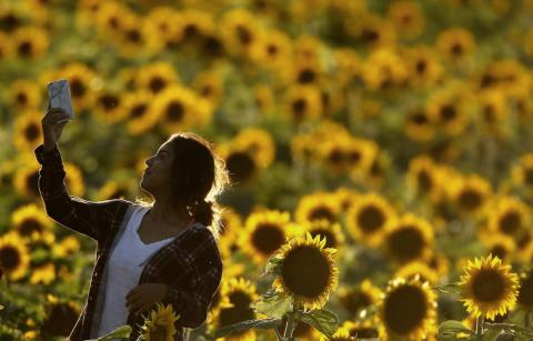 A sunflower farm in Ontario shut its doors to Instagram users forever after thousands overwhelmed its property.