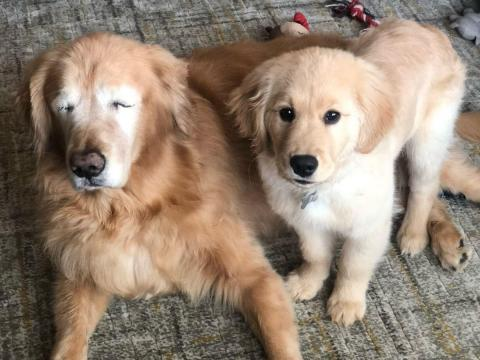 Turns out, seeing eye dogs aren't just for humans — 11-year-old Charlie has a seeing eye puppy of his very own.
