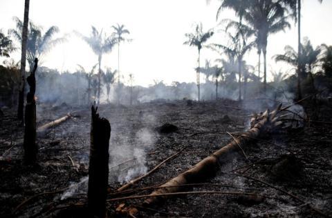 Parte de la jungla del Amazonas en Brasil, este 20 de agosto.
