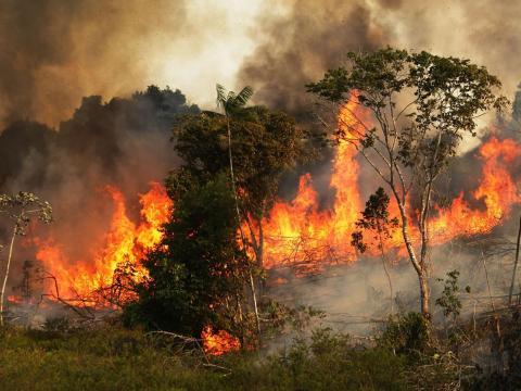 La selva amazónica en Brasil.