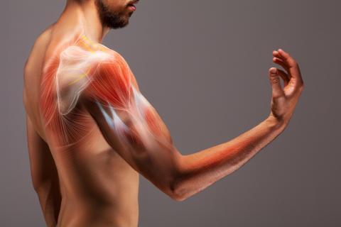 Afinas musculatura