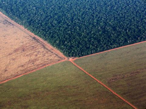 La selva amazónica, bordeada por tierras deforestadas y preparadas para la siembra de soja, en el estado brasileño de Mato Grosso.