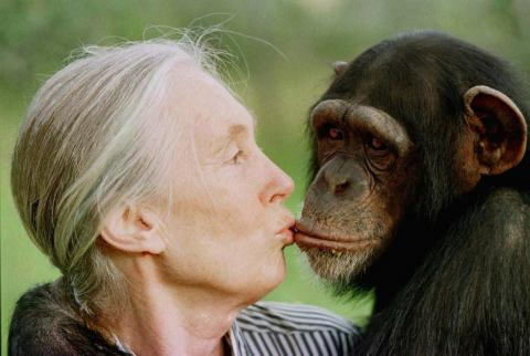 Chimpanzee expert Jane Goodall with a chimpanzee who may or may not be into it.