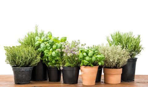 especias, hierbas y flores