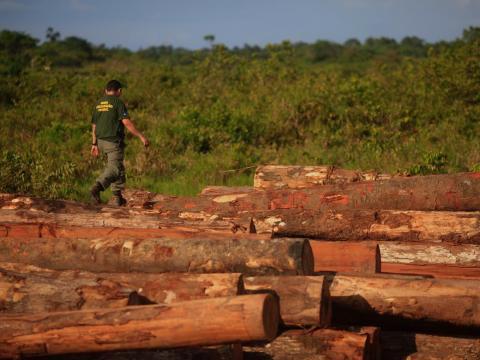 Un agente de la policía medioambiental de Brasil camina sobre montones de troncos que fueron extraídos ilegalmente de la selva amazónica en Viseu, estado de Pará, el 26 de septiembre de 2013.