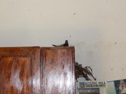 This home had already been adopted ... by a pigeon.