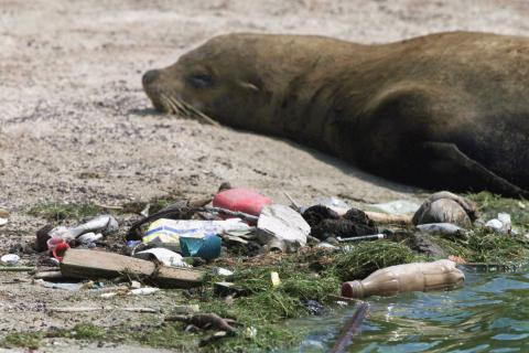 La isla de basura contiene más de 1,8 billones de piezas de plástico que son una amenaza para la vida silvestre.