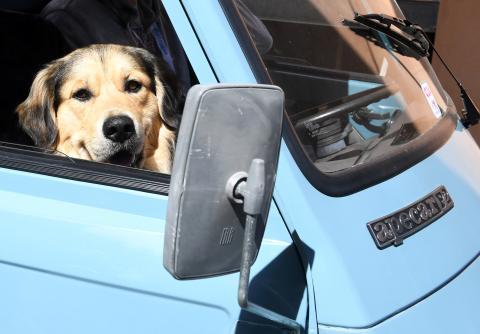 Un perro en el interior de un coche