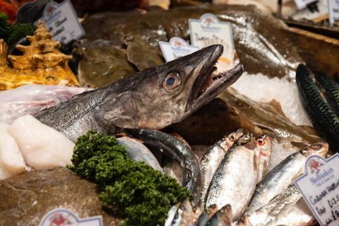 pescados en un puesto, pescadería