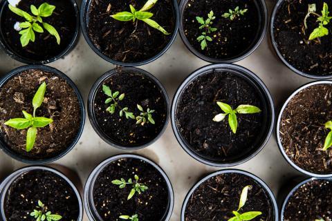 plantas en maceta, compost