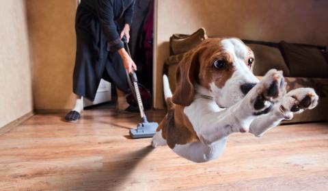 Trucos para limpiar la casa que debes conocer si tienes perro o gato