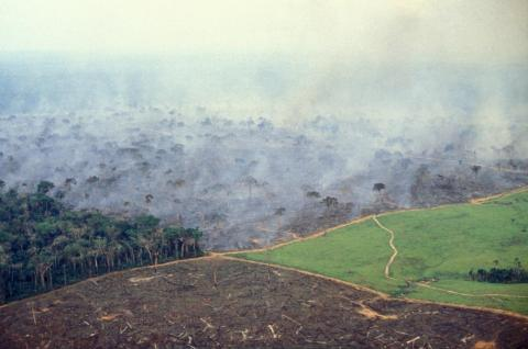This November 17, 2014 photo shows the four stages of land management on a big cattle farm in the Brazilian Amazon: cleared land that was recently burned, a grassy pasture waiting for cattle, burning forest, and native forest that will eventually meet the