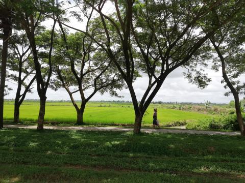 A un lado de la autopista teníamos campos de arroz.