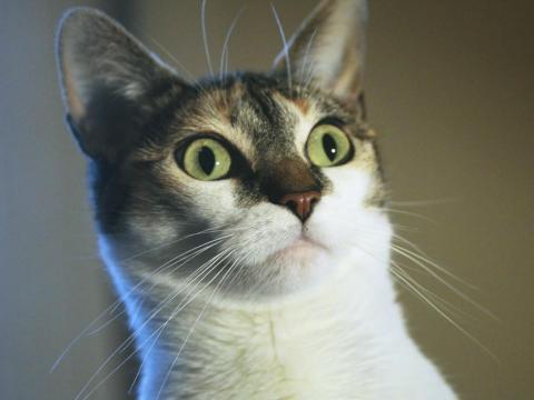 Este gato está absolutamente perplejo.