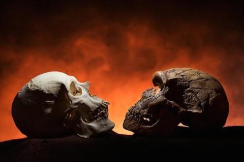 Un cráneo humano moderno (izquierda) tiene un punto en la parte inferior de la cara, la barbilla, mientras que el cráneo de la era de Neandertal (derecha) no.