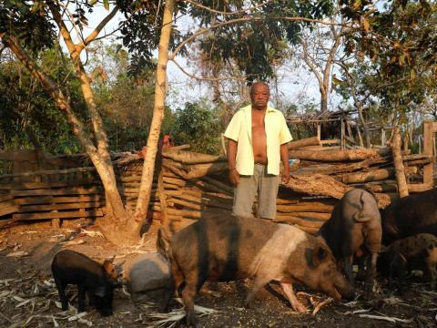 Un agricultor con cerdos en la Amazonía.