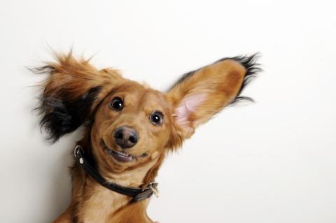 o este otro cachorro, que realmente parece que sabe posar.