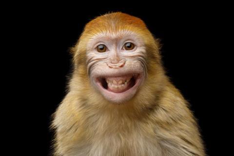 En otras fotos, parece que los animales son conscientes de que todos los ojos están puestos en ellos...